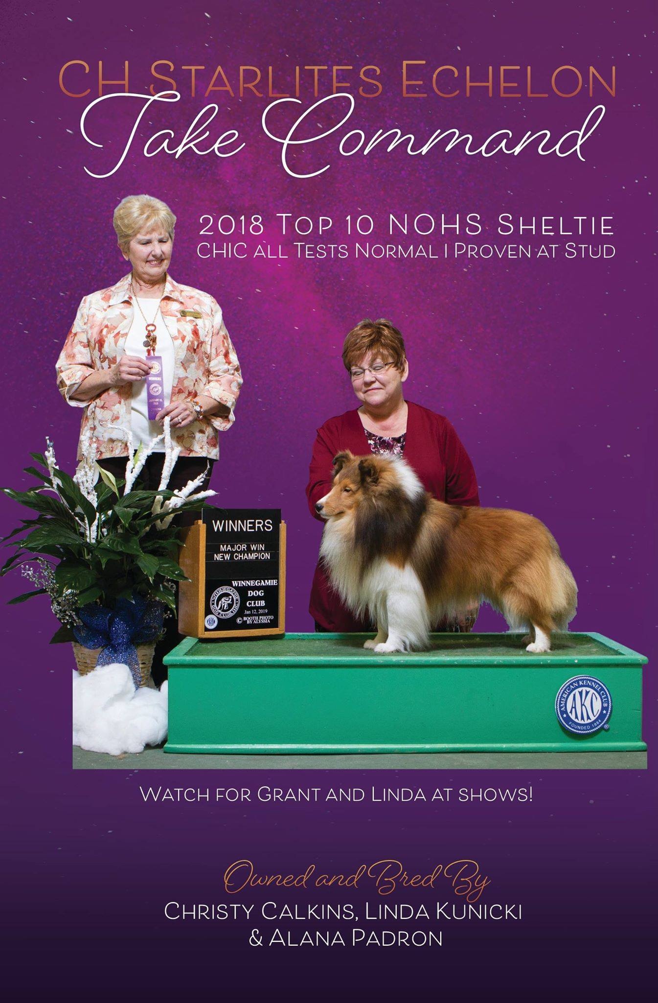 New CH photo ad Sheltie Annual March 2019